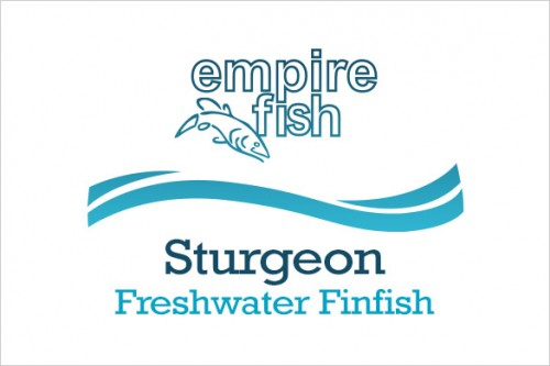 freshwater-finfish-sturgeon