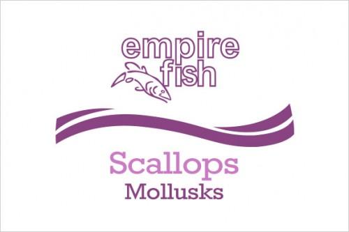 mollusks-scallops