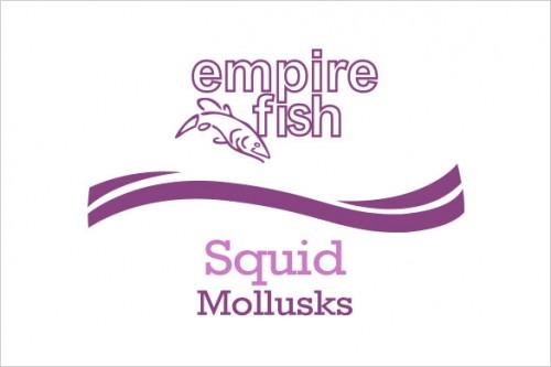 mollusks-squid